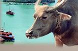 Vietnam Tourismus